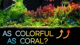 This FRESHWATER Scape is as COLORFUL as a REEF Tank