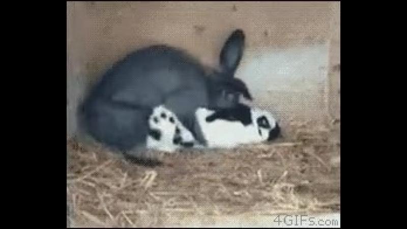 Будни кролика