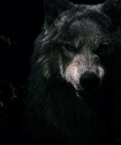 Самат Коколов, 5 июня 1998, Саратов, id174697609
