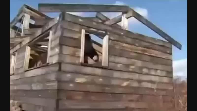 воины укропы