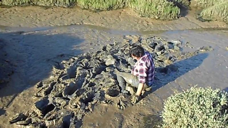 Mud Dive