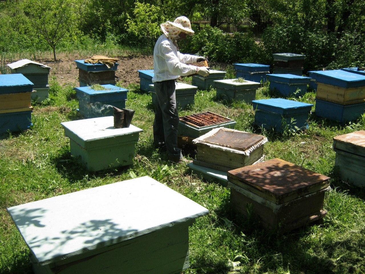 пчеловодство В Армении