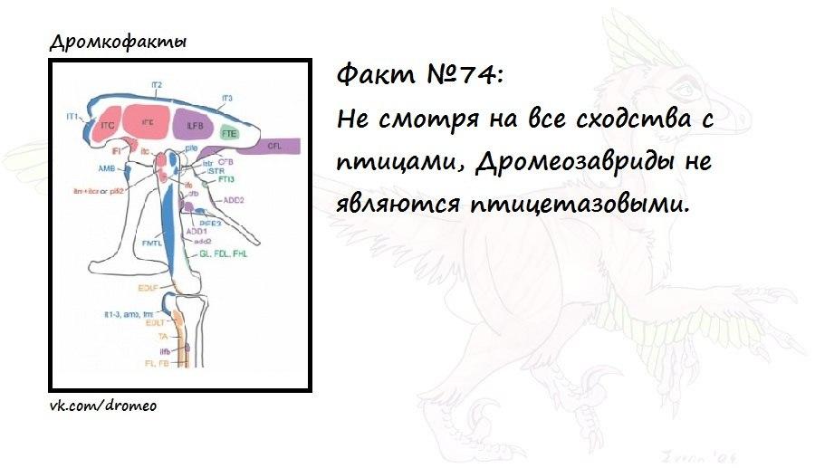 https://pp.vk.me/c621423/v621423874/d013/rJkyLW3bZbY.jpg