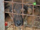Неужели в ветприемнике ГорЭкоЦентра останутся без еды и воды больше 100 собак и кошек?