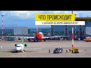 Путь багажа или путешествие Чемодановых_ Что происходит с багажом во время авиаперелета