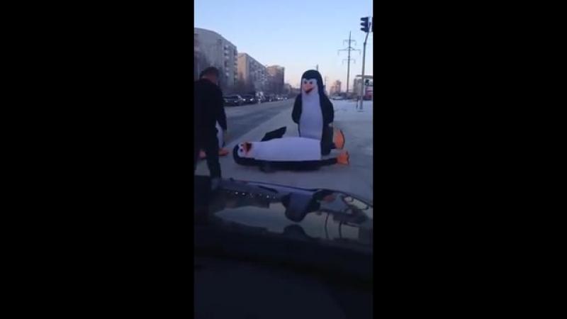 Пингвины переходят дорогу в Сургуте