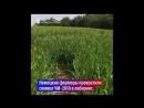Кукурузный лабиринт к ЧМ 2018
