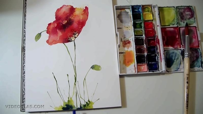 Акварель - рисуем цветы полевые Маки (простой пример для начинающих)(1)