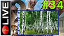🔞 TQAE Завоеватель Эпос Стрим 34 Берёзовый лес