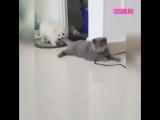 Собака теребит кота за хвост, а ему фиолетово