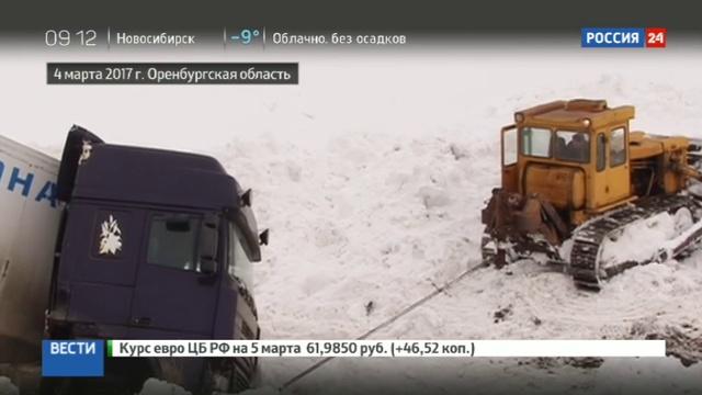 Новости на Россия 24 • Опасные гастроли: попавшие в ДТП тигры напуганы