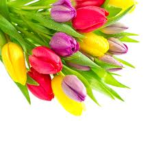 Дорогие женщины, с 8 марта!