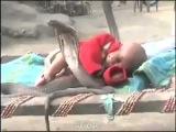 4 змеи Кобры, защищающие спящего Ребенка