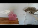 Кот в ветклинике после процедур и уколов!