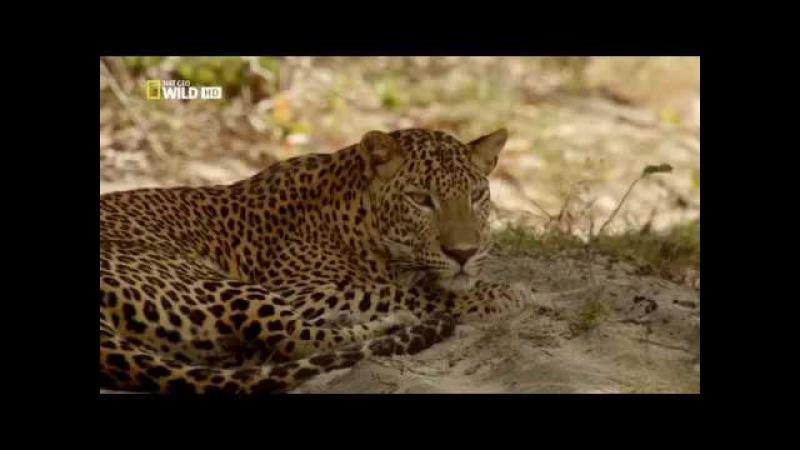 Дикая Шри Ланка. Край озер (документальный фильм) [HD]