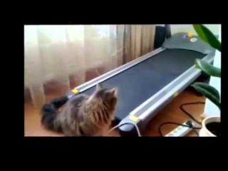 Смешные приколы с животными 2013 / New Funniest Animals № 3
