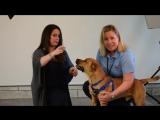 Холли Мари Комбз с мамой в приюте Broward County Animal Care and Adoption.