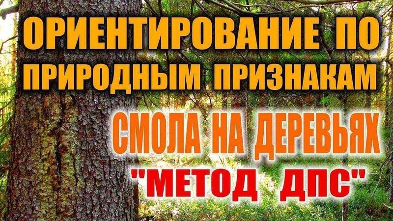 КАК НАЙТИ СЕВЕР. Ориентирование по смоле на деревьях. Ориентирование в лесу, на местности