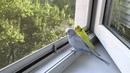 Тоша и Ника - волнистые попугайчики. Прогулка у окна!