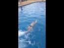 Эстафета по плаванию