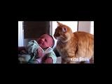 Дети и кошки.  Очень милое видео.