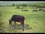 Vaca sendo abduzida