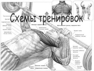 Середина, низ, а также верх груди/Лучшее базовое упражнение для наращивания массы и силы груди.  1 - Жим штанги лежа.