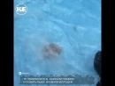 На берегу Ладожского озера отдыхающие спасли истощённую нерпу
