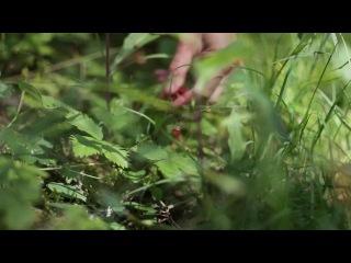 wild strawberries essay