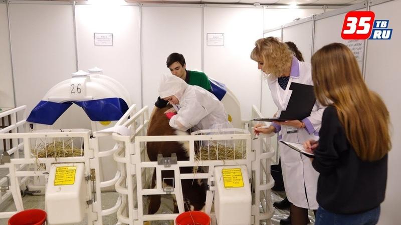 Лучших молодых профессионалов среди ветеринаров выбирают в Вологде
