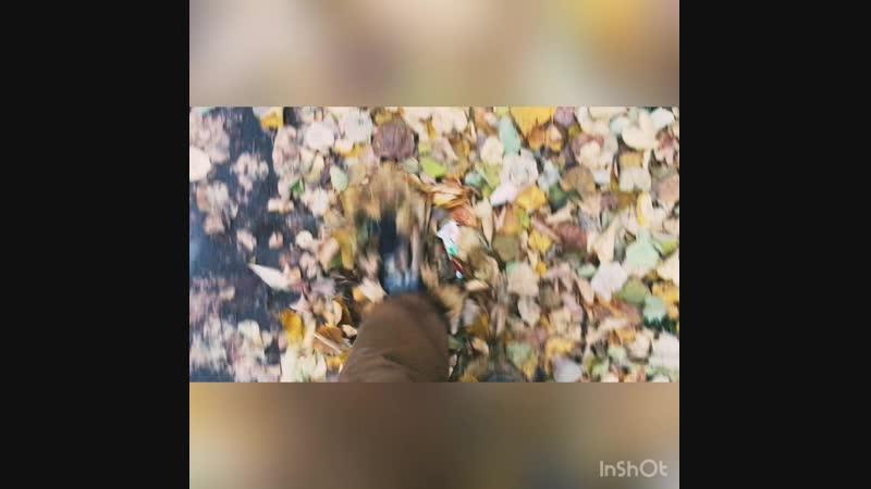 Я пинал по скверу золотые листья