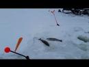 Ловля с помощью ветра- Лепесток на кивок Etovashe