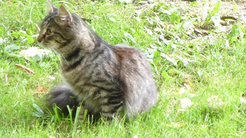 Кот жуёт траву