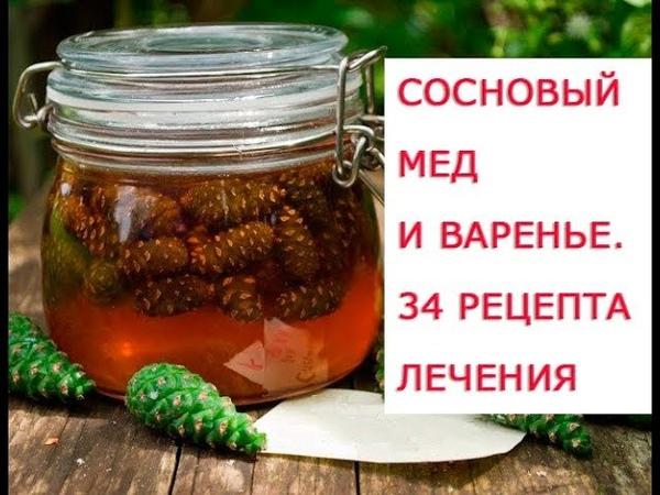 Целебные свойства зеленых шишек сосны, когда и как собирать Сосновый мед и лечебное сосновое варень