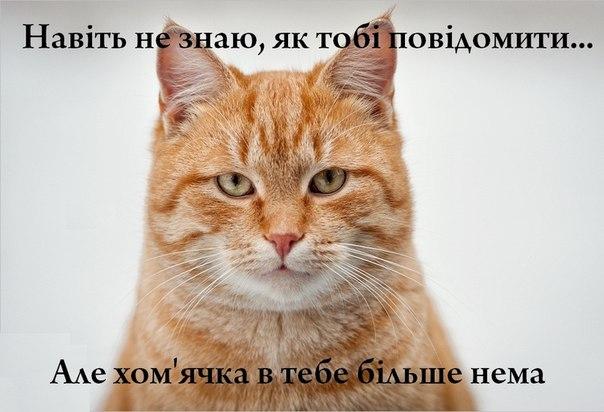Кіт з'їв хом'ячка