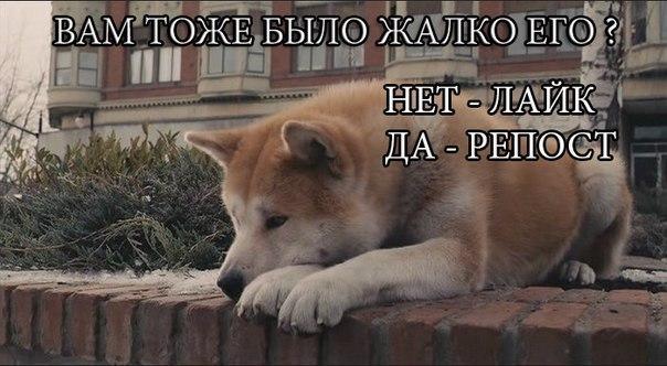 Фото №412773040 со страницы Раксаны Мухамадиевой