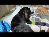 Эльза надеется на помощь 2014-01-22