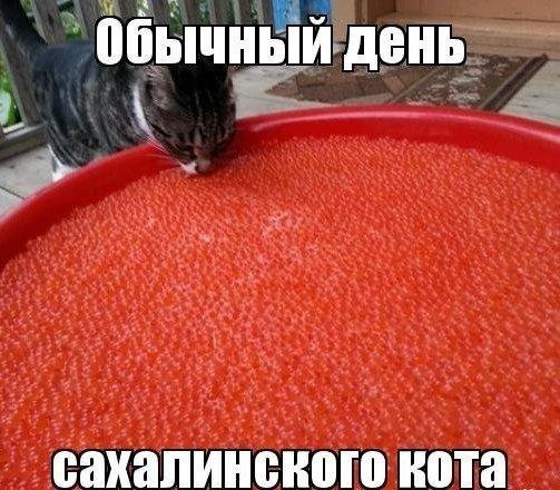 Обычный день сахалинского кота