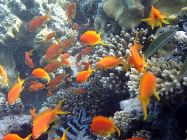 Подводная жизнь Египта