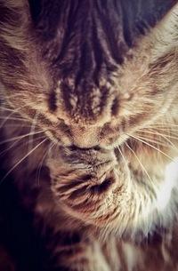 Meow Meow, 1 октября 1902, Архангельск, id221798777