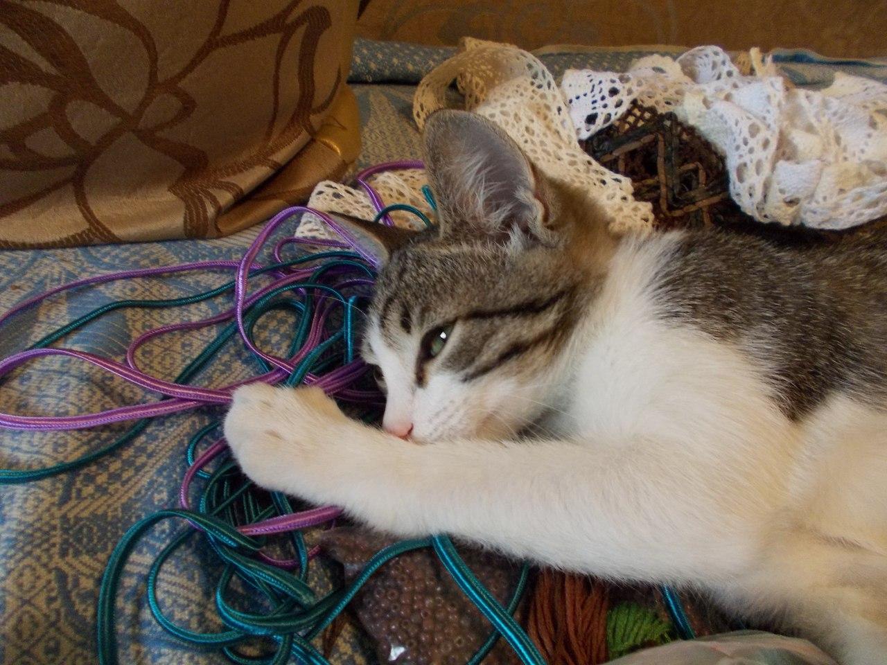 кот и рукоделие