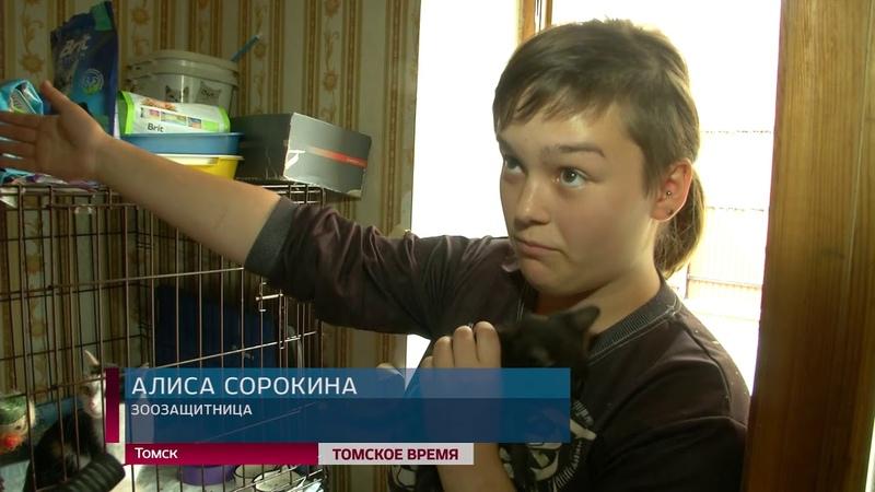 В Томске решают судьбу нелегального приюта для животных