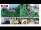 В Ачинске двое мужчин расстреляли собак