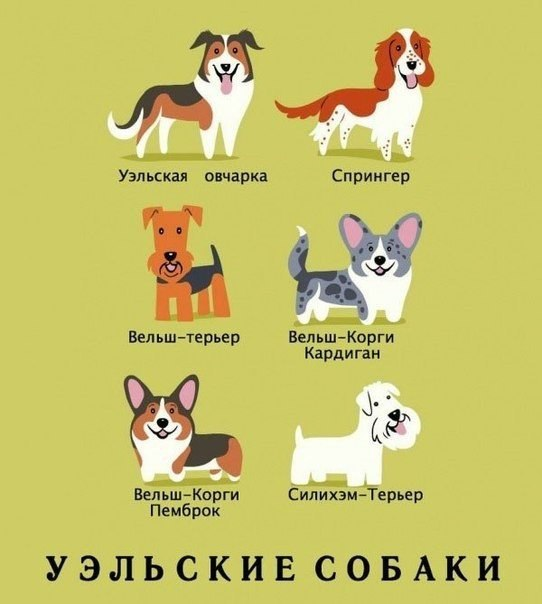 Фото №386562742 со страницы Натальи Ветлугаевой