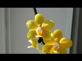 Р. I-Нsin Cutie Honey