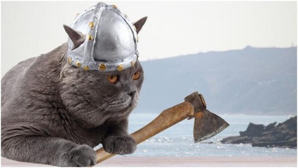 Про котов викингов