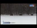В лесах Новосибирской области начали перепись диких животных