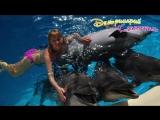 Плаванье с дельфинами, фото с дельфинами.