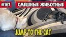 Прыжок на кота. Смешные животные, Funny vines подборка 167.