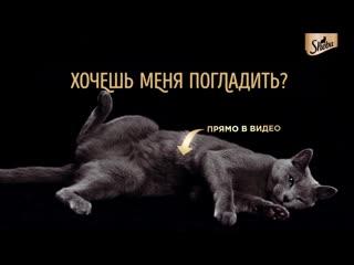 Bhts_strokable_cat_6sec_(vk)